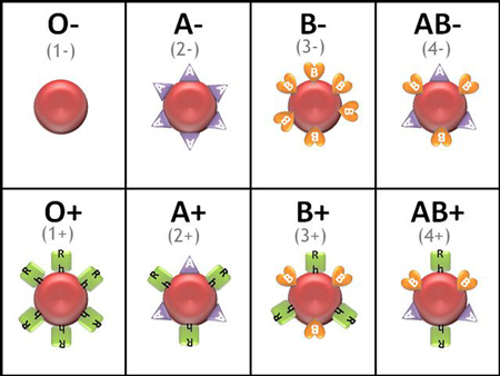انواع مختلف گروه خونی جهت بررسی اهمیت گروه خونی در ازدواج